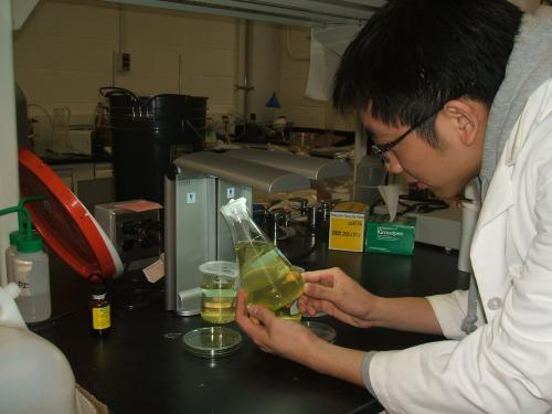 Aaron Lee worked with Assistant Professor Claudia Gunsch on factors affecting the growth of microalgae that is used in the production of biodiesel.